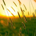 hukum, syarat, rukun dan tata cara Shalat Jenazah