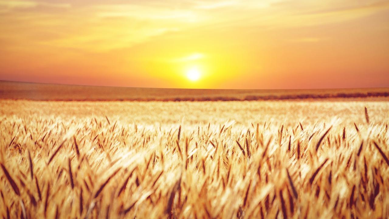 ladang untuk beramal