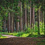 Empat Prinsip Selamat dari Kesyirikan